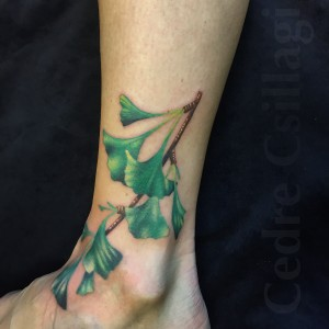 ginkgo branch color realistic botanical