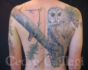 tree owl tattoo color coverup